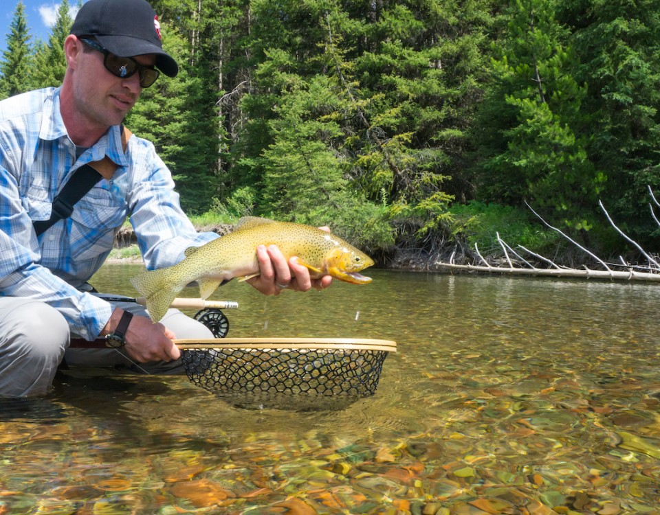 Colorad Backcountry Hunters and Anglers