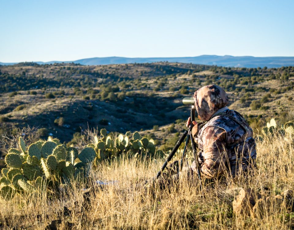 Guided Hunting in Arizona